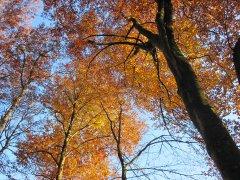 Herbst_1.JPG