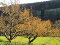 Herbst_10.JPG