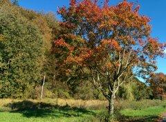 Herbst_11.jpg