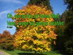 Herbst_6.JPG