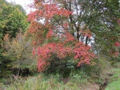 Herbst_8.JPG