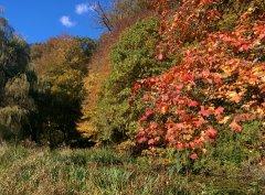 Herbst_9.jpg